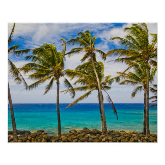 Coconut palm trees (Cocos nucifera) swaying in Poster