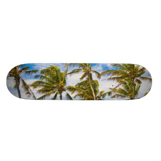 Coconut palm trees (Cocos nucifera) swaying in Skateboard