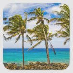 Coconut palm trees (Cocos nucifera) swaying in Square Sticker
