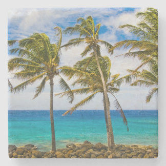 Coconut palm trees (Cocos nucifera) swaying in Stone Coaster
