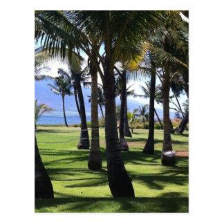 Coconut Palms Nui Hawaii Post Card