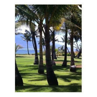 Coconut Palms Nui Hawaii Post Card