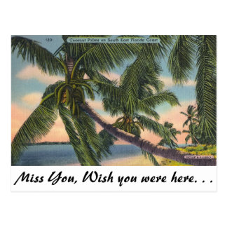 Coconut Palms on South East Florida Coast Postcard
