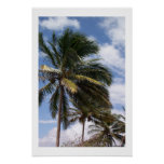 Coconut Palms Posters