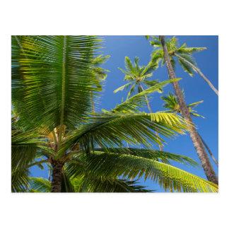 Coconut palms, Pu'uhonua o Honaunau 1 Postcard