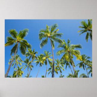 Coconut palms, Pu'uhonua o Honaunau 2 Poster