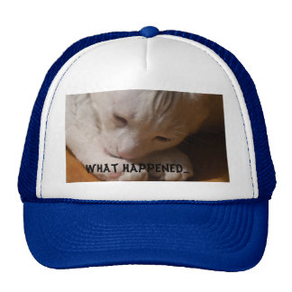 Coconut the cat--WHAT HAPPENED... Hats