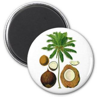 Coconut Tree Botanical Illustration 2 Inch Round Magnet