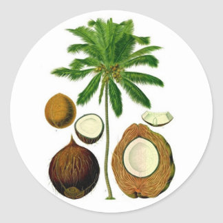 Coconut Tree Botanical Illustration Classic Round Sticker