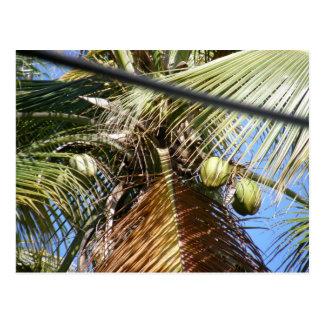 Coconut Tree Dominica Postcard