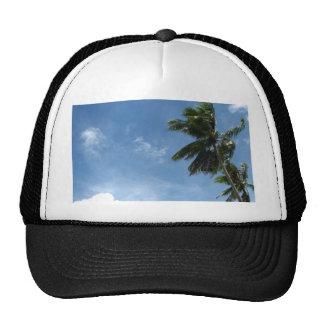 Coconut tree hat