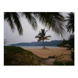 Coconut tree postcard