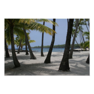 Coconut Trees at Place of Refuge, Hawaii - Print