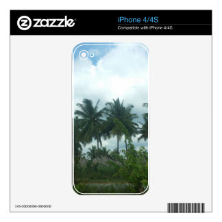 coconut trees on a roadside iPhone 4 decals