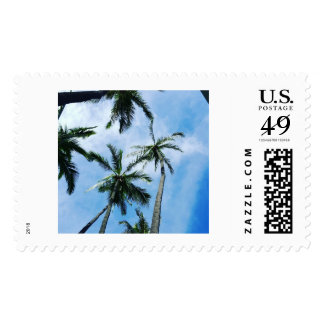 Coconut  trees stamp