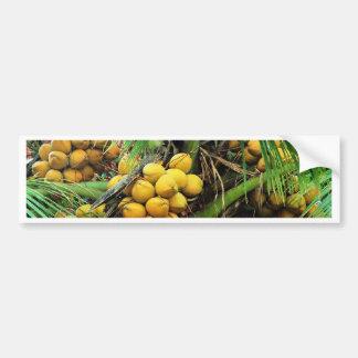 coconuts on the tree car bumper sticker
