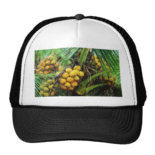 coconuts on the tree trucker hat