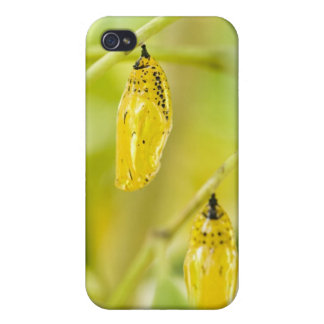 Cocoon of Paper Kite Butterfly, Okinawa iPhone 4/4S Case