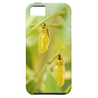 Cocoon of Paper Kite Butterfly, Okinawa iPhone SE/5/5s Case
