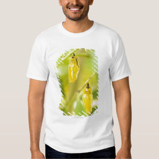 Cocoon of Paper Kite Butterfly, Okinawa T-shirt