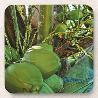 Cocos de la isla posavasos de bebida