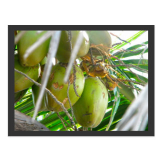 Cocos en Palmtree Tarjeta Postal