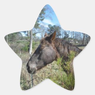 Cocos y caballo color nata pegatina en forma de estrella