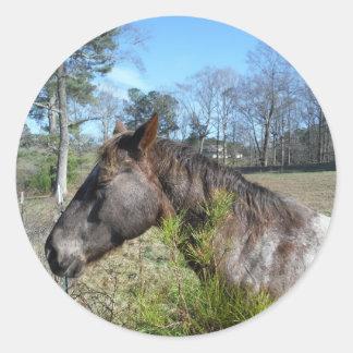 Cocos y caballo color nata pegatina redonda
