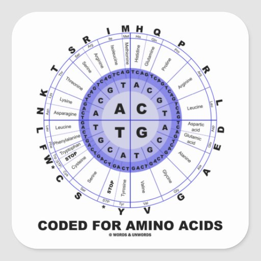 Coded For Amino Acids (Genetic Code DNA) Square Sticker