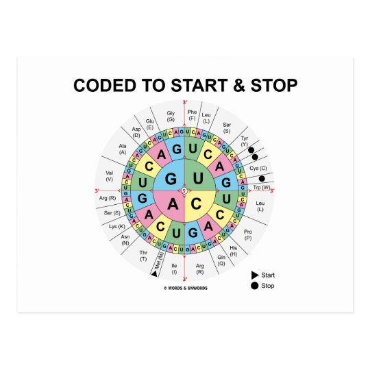Coded To Start And Stop (Codon Wheel) Postcard
