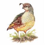 Codornices de California de la acuarela, pájaro de Esculturas Fotograficas