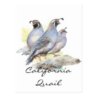 Codornices de California originales de la acuarela Tarjeta Postal