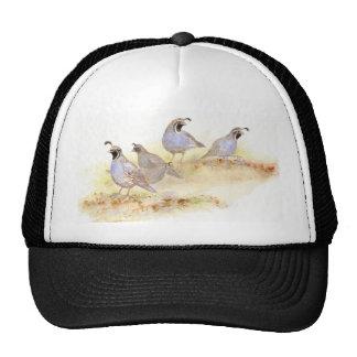 Codornices de California, pájaros, naturaleza, fau Gorra