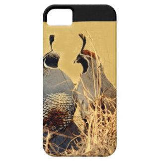 Codornices del valle (California) iPhone 5 Carcasas