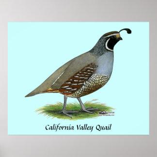 Codornices del valle de California Póster