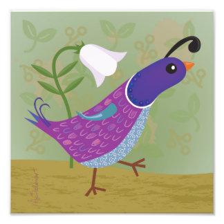 Codornices púrpuras del baile con la impresión del impresion fotografica