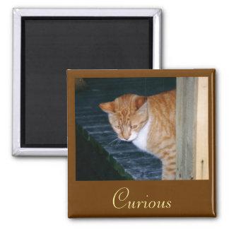 Cody el imán curioso del gato