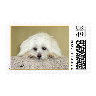 """Cody"" Postage Stamp"