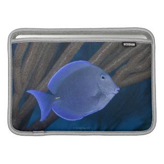 Coeruleus del Acanthurus con el mar Fundas MacBook