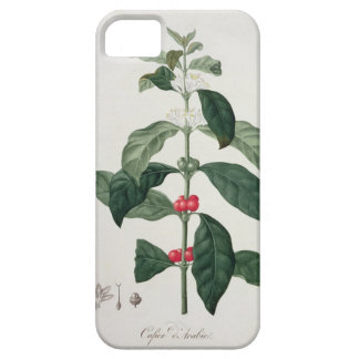 Coffea Arabica from 'Phytographie Medicale' by Jos iPhone SE/5/5s Case