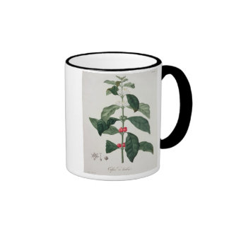 Coffea Arabica from 'Phytographie Medicale' by Jos Ringer Mug