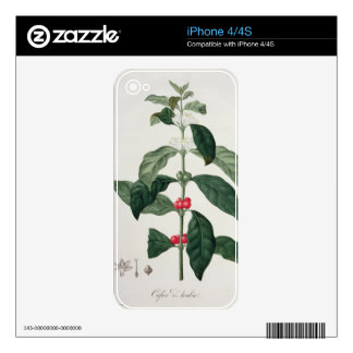 Coffea Arabica from 'Phytographie Medicale' by Jos iPhone 4S Decal