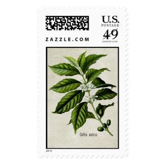 Coffea Arabica Postage Stamp