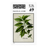 Coffea Arabica Postage Stamps