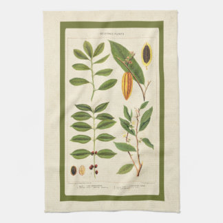Coffee Antique Tea Botanical Beverage Plants Chart Kitchen Towel