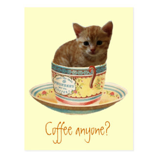 Coffee Anyone? kitten postcard
