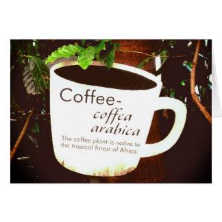Coffee Arabica notecard