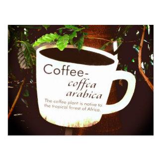 Coffee Arabica postcard