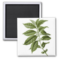 Coffee Bean Plant Magnet