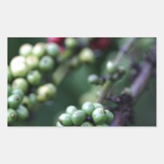 Coffee beans ripening rectangular sticker